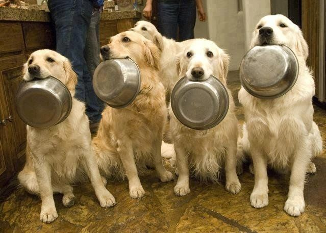What to Feed Your Dog When You re Out of Dog Food