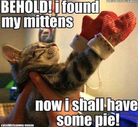10 Funny Cat Memes 2015 Cute Cat s & Pics via funny