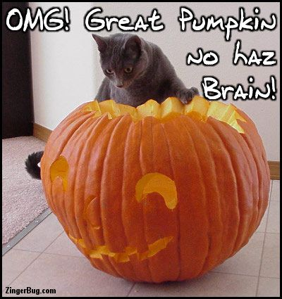 Halloween Cat to the codes for this image Omg Great Pumpkin No Haz Brain Funny