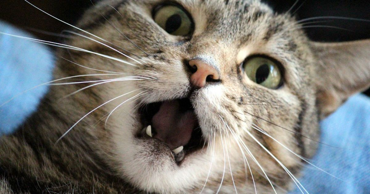 funny cat stories featured