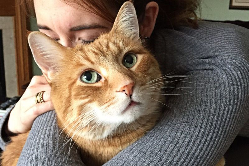 Interestingly enough the second least popular cats to be adopted are orange tabbies Now orange you glad we shared that Our own orange tabby Mouse