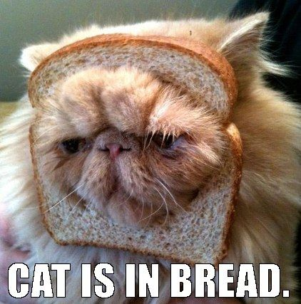 Cat that is clearly in bread