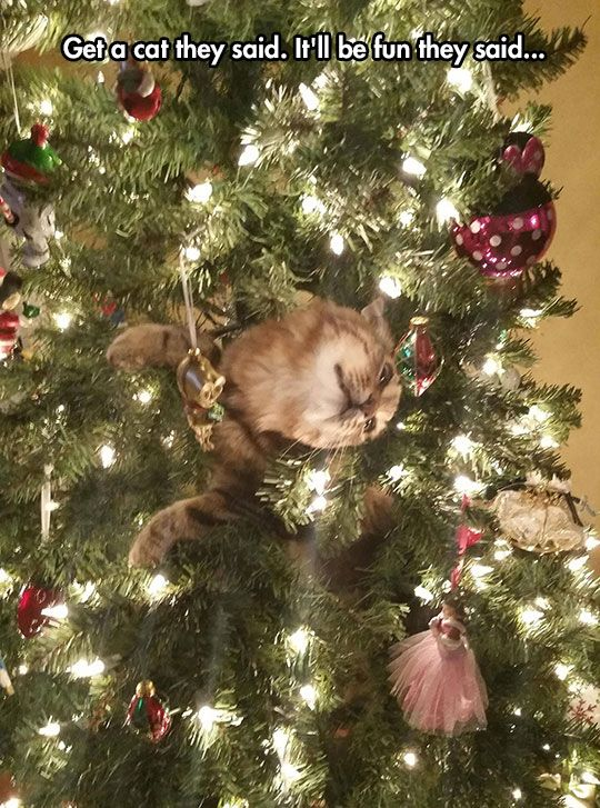 Grab the Shocking Funny Cat Pictures at Christmas