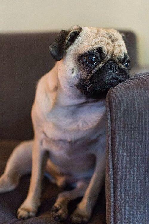 Pug Love I Love Dogs Sad Faces Pug