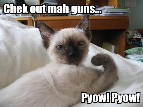 Funny Cat holding Sniper Gun