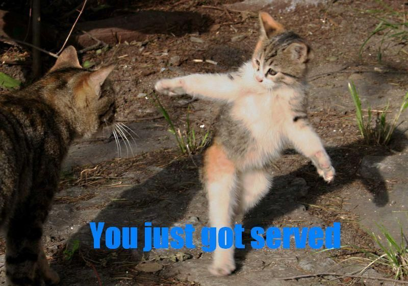 Grab the Shocking Funny Thank You Cat Pictures