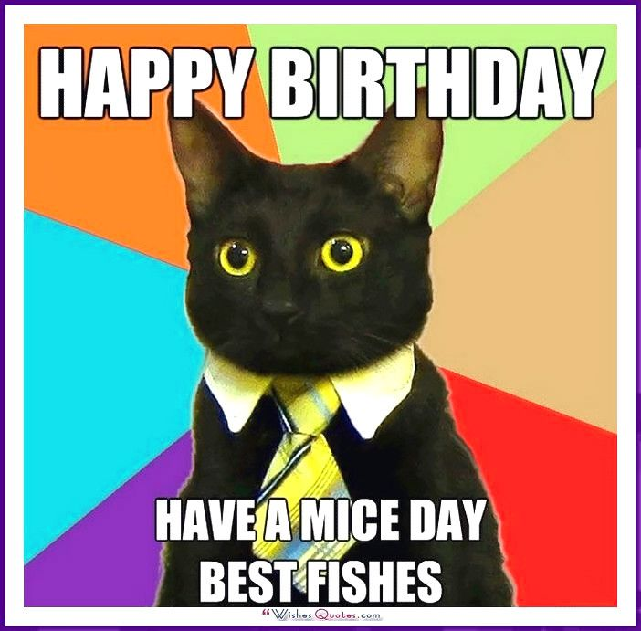 Birthday Meme with a Cat Happy Father s Day To the best Dad in the
