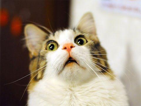 Funny cat Faces Videos pilation