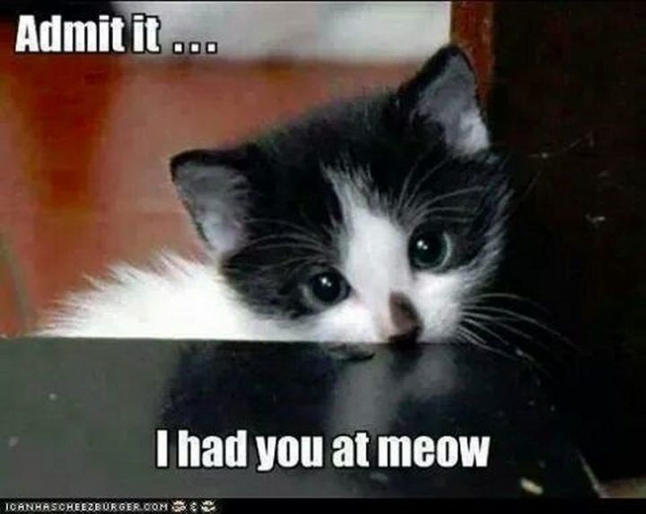 """55 Funny Cat Memes """"Admit it I had you at meow """""""