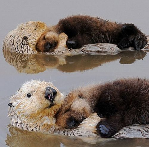 There are are several really cute pix of other lil animals includin one of a wee panda that s can t use a slide very well