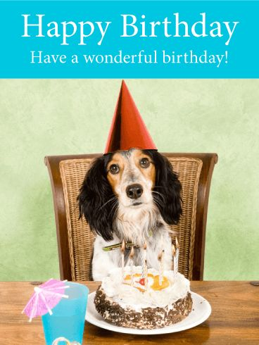 dog birthday card happy dog birthday card birthday greeting cards davia