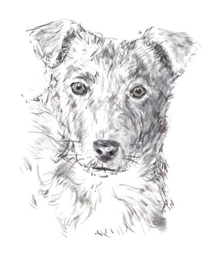 How to Draw A Easy Wolf Face How to Draw A Dog From A Graph