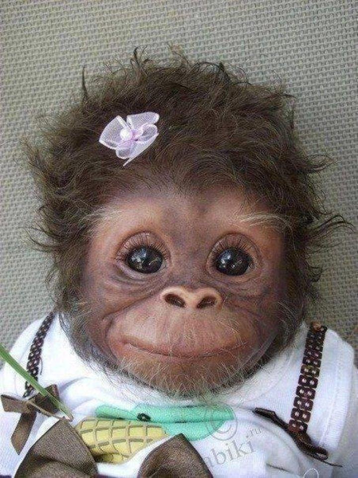 pet baby chimp Just too cute