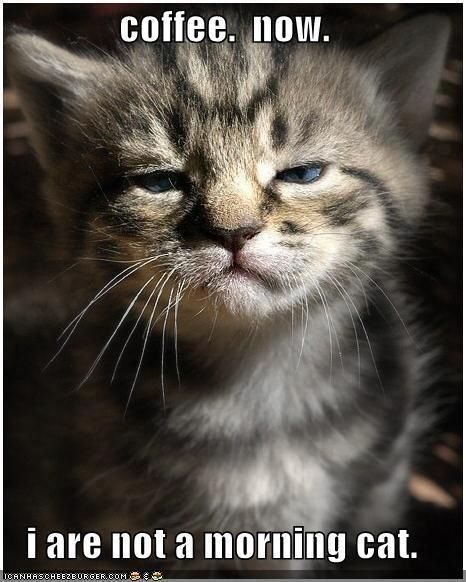 15 Cats That Are Very Disappointed In You C O F F E E
