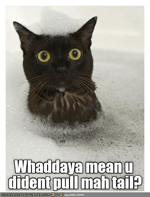 Funny meme of a black cat in the tub with bubbles and is shocked with caption