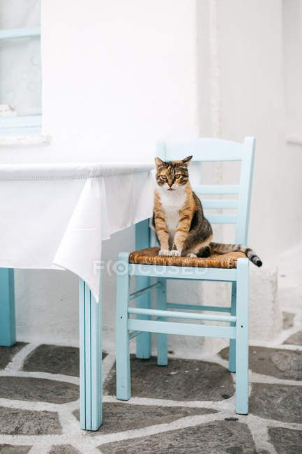 Cute funny cat sitting on chair at table — Stock