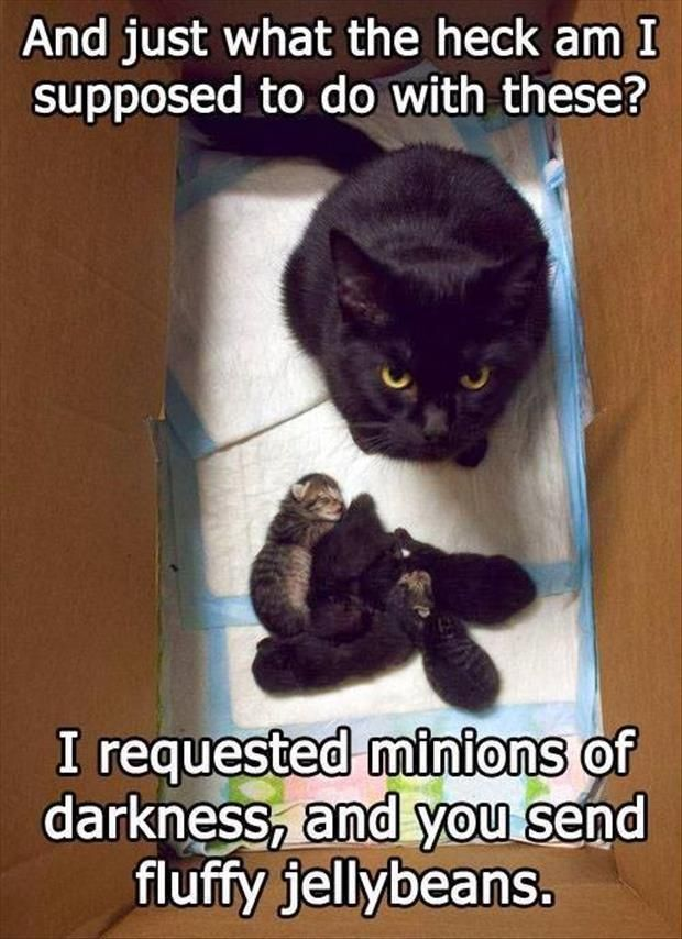 Grab the Suprising Funny Creature Of Darkness Cat Pictures with Captions