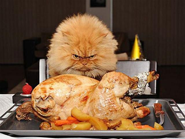 Cat and turkey