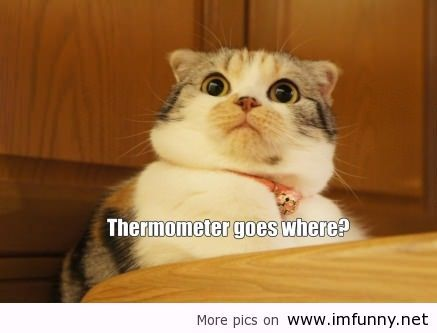 Surprised cat with sayings