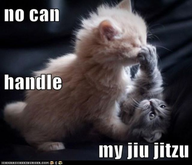 Grab the Unbelievable Cute Funny Cat Pictures with Words