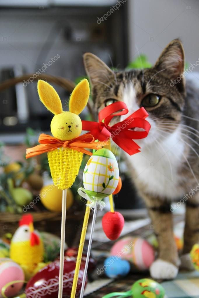 Easter rabbit and funny cat — Stock