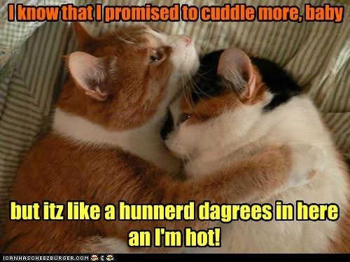 hot romance temperature funny