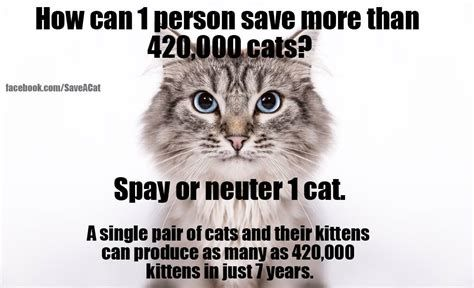 Grab the Unbelievable Funny Cat Neuter Memes