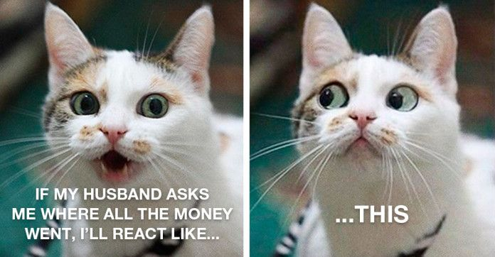 Tag cat picture money funny