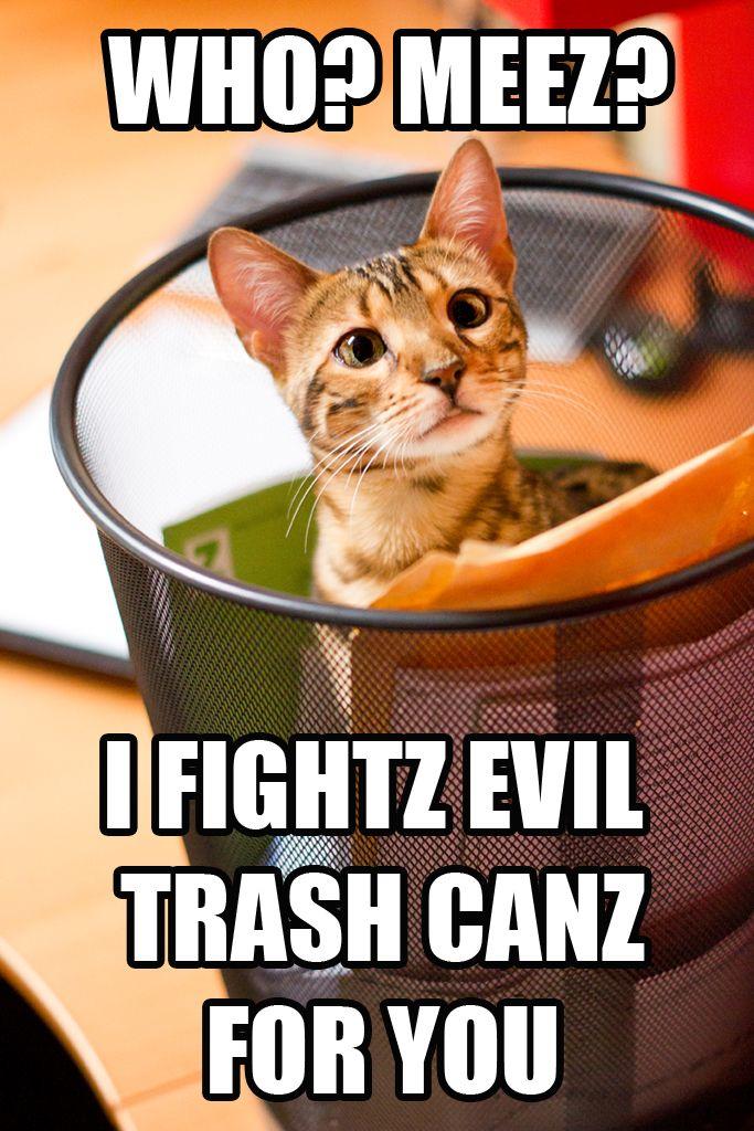 funny cat meme peta2 adopt
