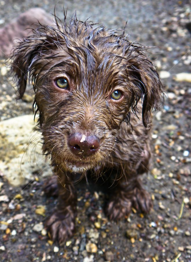 First Rainy Day by Dorothyism ∞ Animals Dogs Playing dog mud cute funny huh greeneyes gibson dogday rainyday adorable puppy