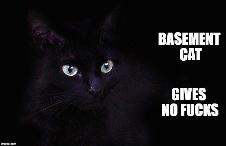 Basement Cat BASEMENT CAT GIVES NO F KS