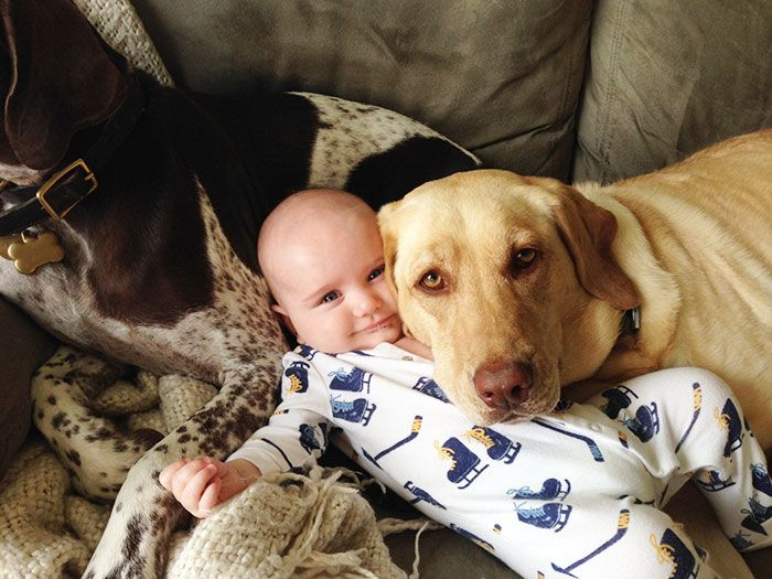 29 Dog Cuddling A Baby