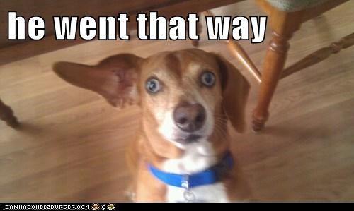derp dogs ears goggie helpful