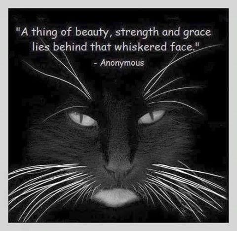 cat meme gorgeous poem