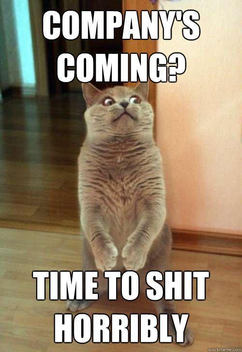 pany s ing Cat Meme