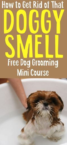 If you re struggling ting rid of that dog smell shedding or grooming your