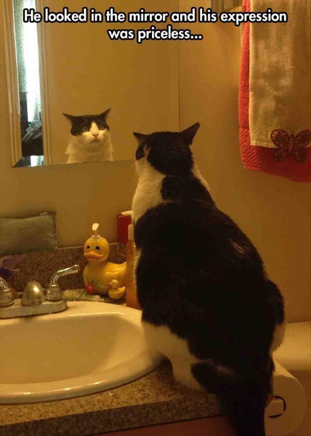 Random LOL Funny Animals 08 18 50 PM Wednesday 08 April 2015 PDT – 23 pics