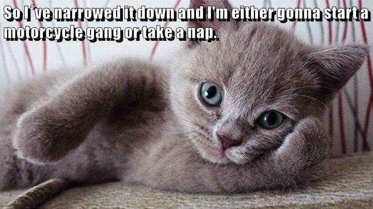 Grab the Unique More Funny Cat Pictures