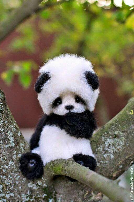 Baby Pandas Cute Panda Baby Adorable Baby Animals Panda Babies Cute Pets