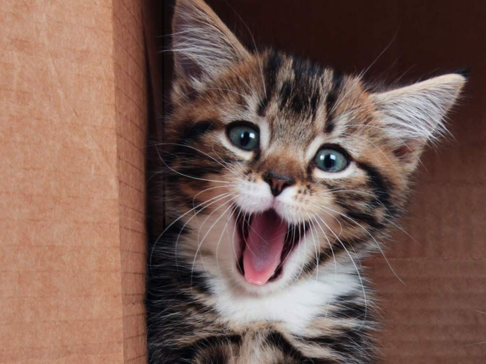 3 Funny Pet Stories That Prove We ll Do Anything for Our Favourite Animals