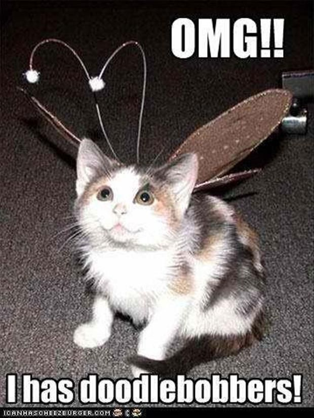 funny pictures cat hat