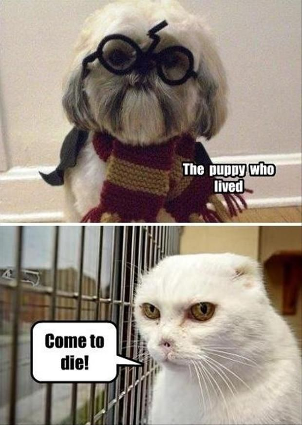 Funny Harry Potter 24 Pics Laughter Pinterest
