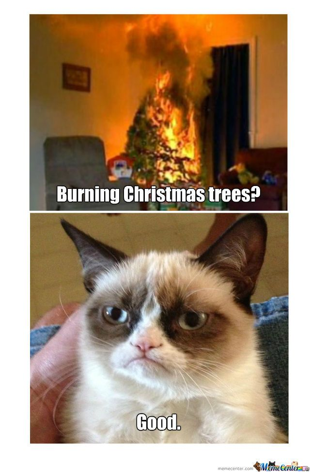 Grumpy Cat s Christmas