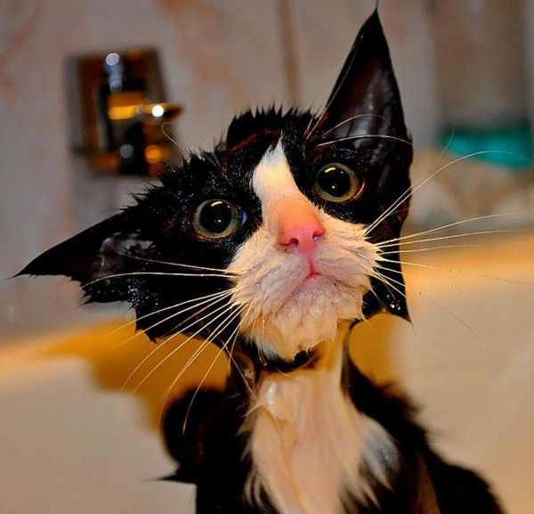 Trick question cats hate EVERYTHING But a good guess is being wet Unfortunately for the following cats they re drenched