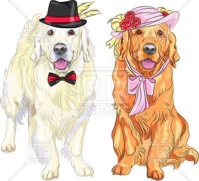 Two funny dogs in hats of gentleman and lady Labrador Retriever Vector Image – Vector