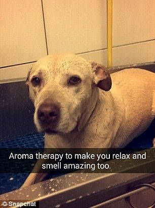 Aroma therapy to make you relax and feel amazing too her owner wrote