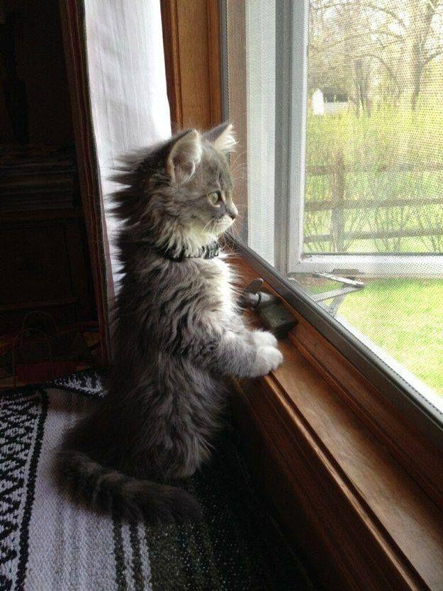 Happy Kitty – 5th October 2015