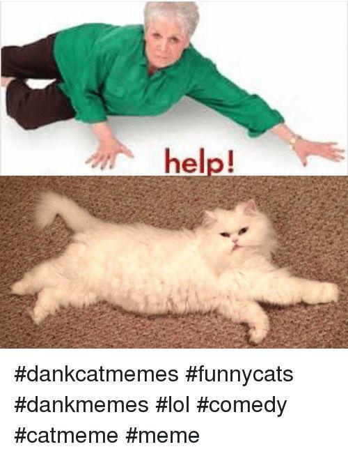 Cats Lol and Meme help dankcatmemes funnycats dankmemes edy catmeme meme