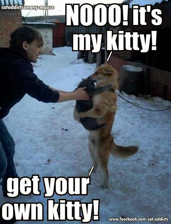 Fun Claw Funny Cats Funny Dogs Funny Animals Funny Animals 20 Pics Nicole Novembrino Novembrino D
