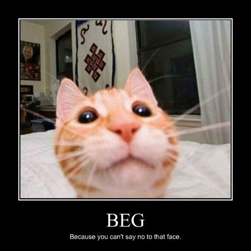 begging Cats funny